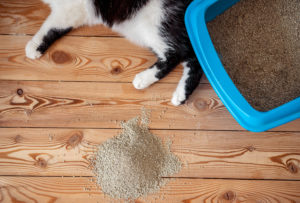 Clay is not Hypoallergenic Kitty Litter